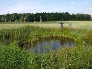 Wichtig ist das Fehlen von räuberisch lebenden Fischen, die Amphibienlarven fressen. Das Südufer sollte möglichst niedrige Vegetation aufweisen, damit die Sonne das Wasser für den Kammmolch ausreichend erwärmt.