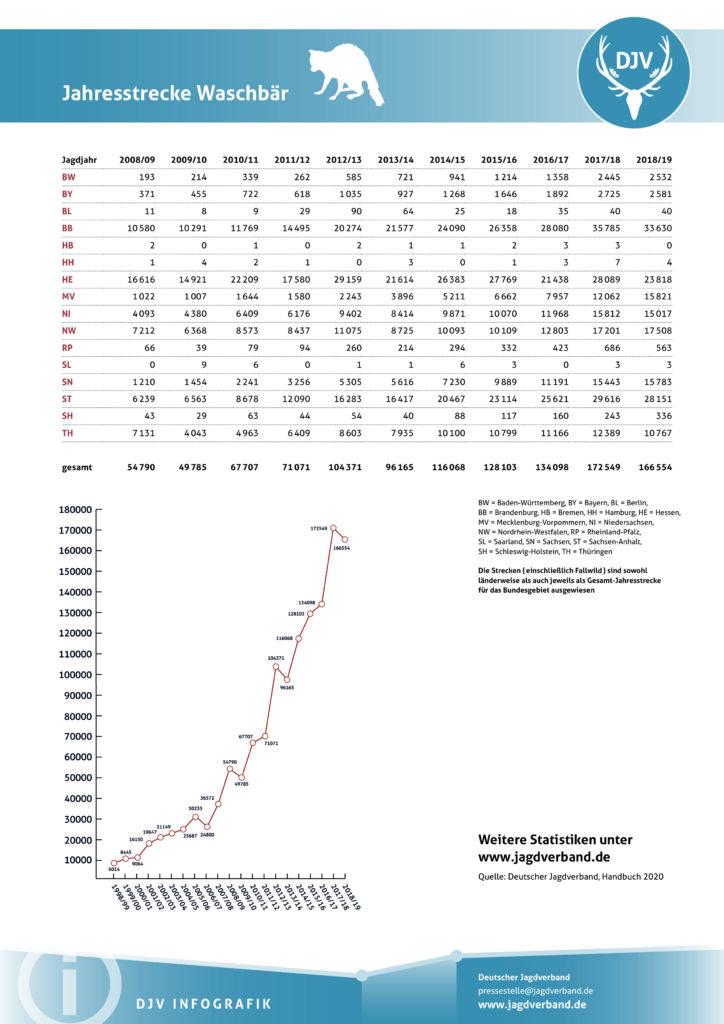 Infografik_Jahresstrecke_Waschbaer_2018_2019