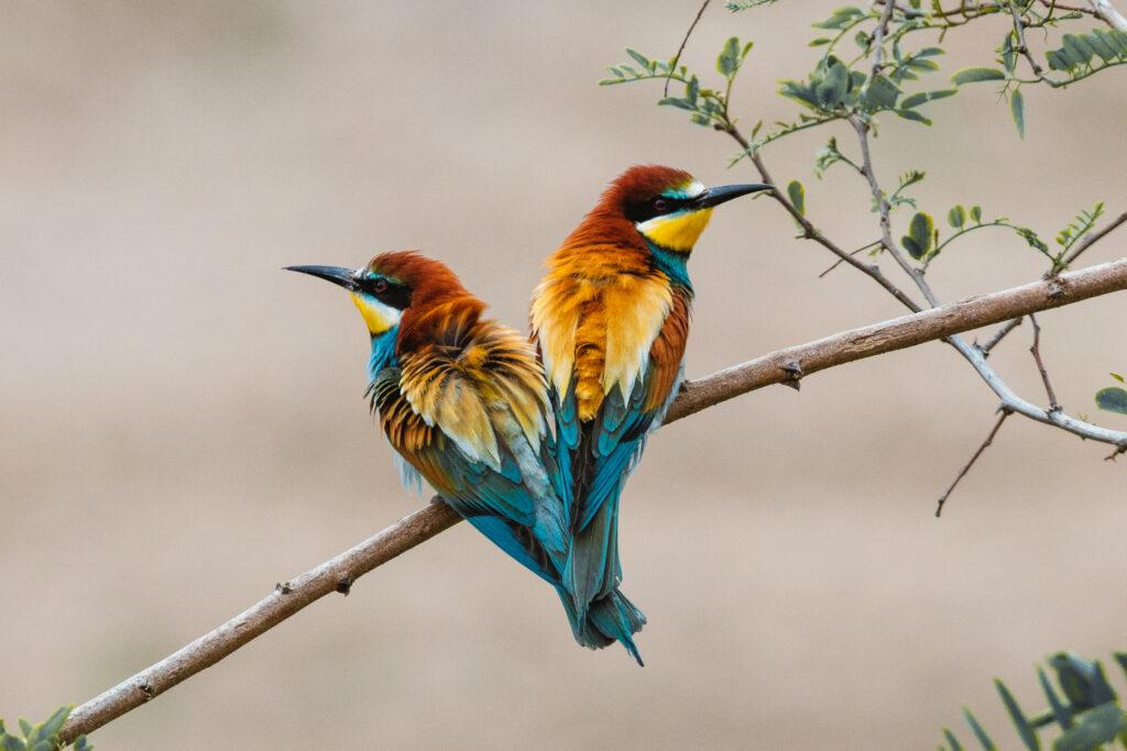 Der Bienenfresser könnte Vogel des Jahres 2021 werden. Stimmen Sie mit ab! Foto: Moritz Gasche