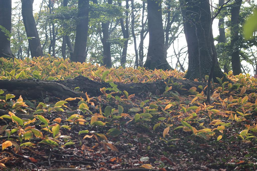 Waldgebiet Storkenberg, Halle. Foto: Martina Vogt