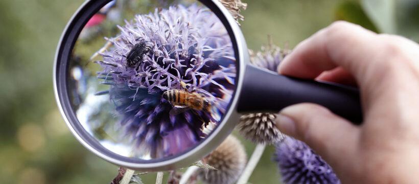 Insektenzählung