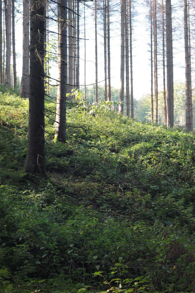 Waldgebiet Storkenberg. Foto: Martina Vogt